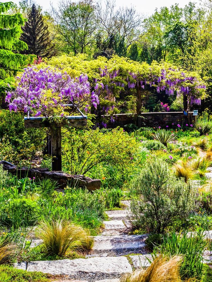 Chanticleer花园,春天的脚步_图1-5
