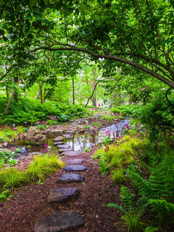 Chanticleer花园,春天的脚步_图1-12