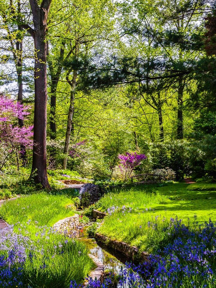Chanticleer花园,春天的脚步_图1-8