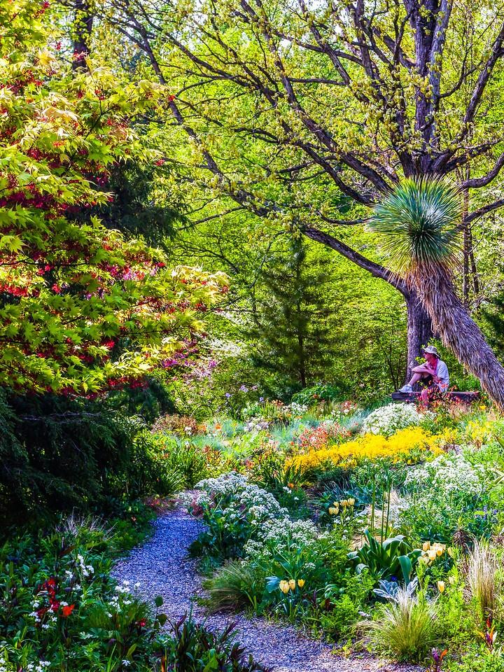 Chanticleer花园,春天的脚步_图1-11