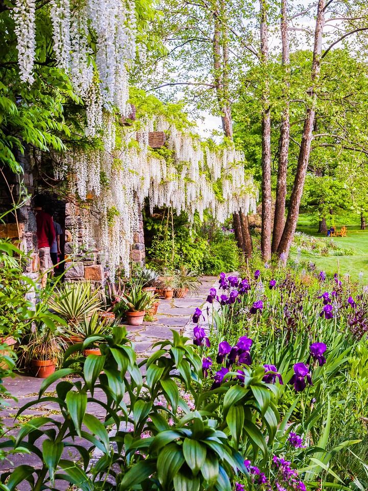Chanticleer花园,春天的脚步_图1-9