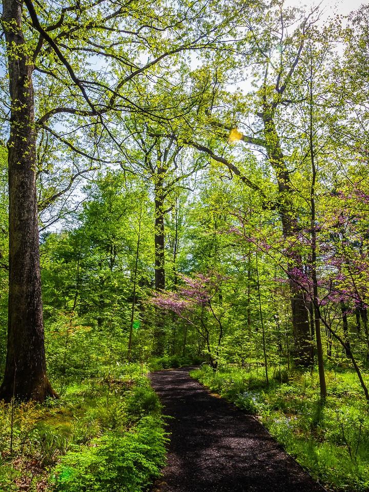Chanticleer花园,春天的脚步_图1-14