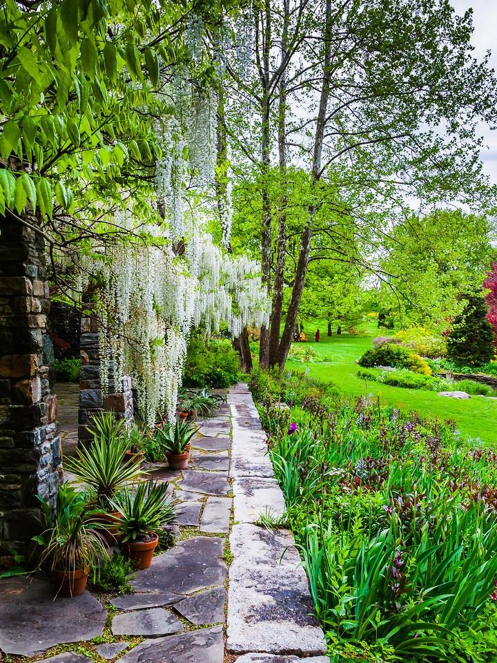 Chanticleer花园,春天的脚步_图1-16