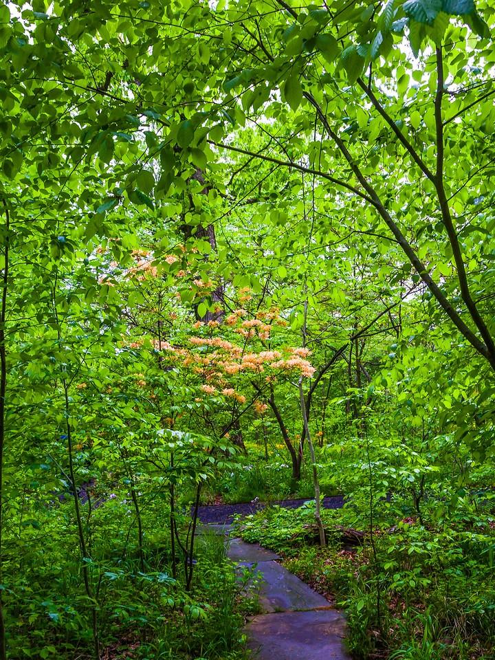 Chanticleer花园,春天的脚步_图1-19