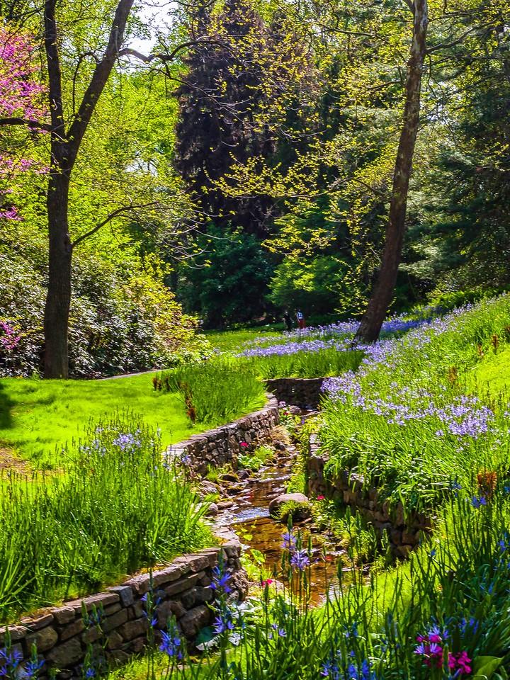 Chanticleer花园,春天的脚步_图1-18