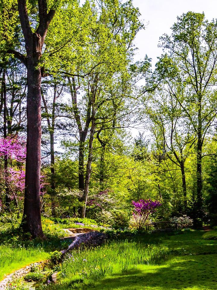 Chanticleer花园,春天的脚步_图1-17