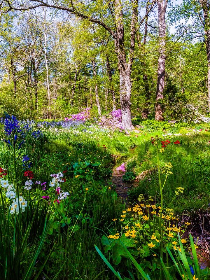 Chanticleer花园,春天的脚步_图1-21