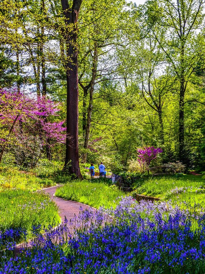 Chanticleer花园,春天的脚步_图1-22