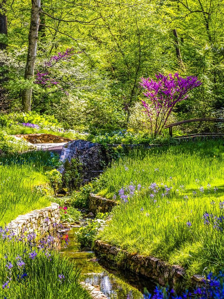 Chanticleer花园,春天的脚步_图1-23