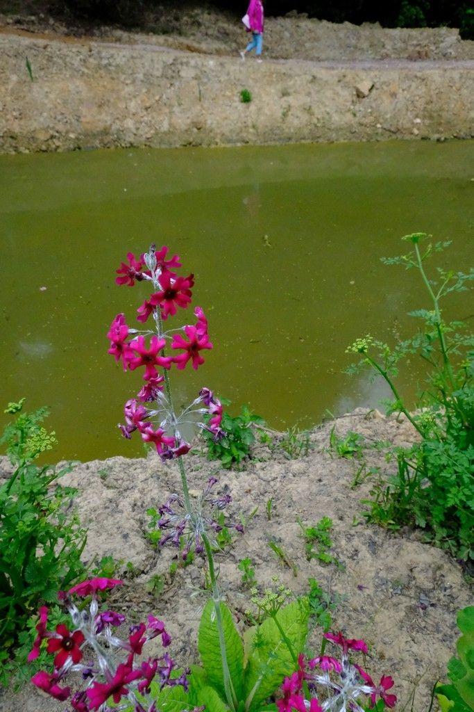 莱昂纳德利湖和花园_图1-26