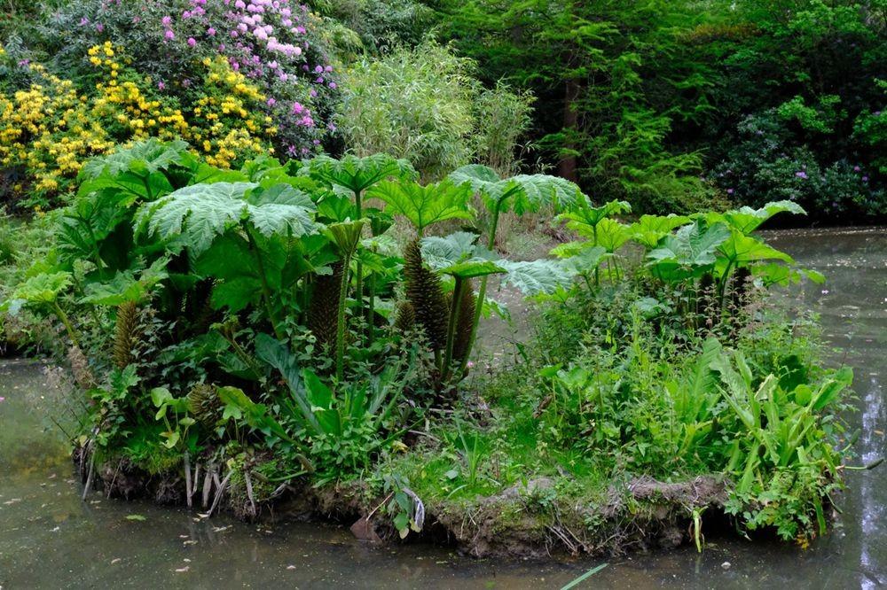 莱昂纳德利湖和花园_图1-29