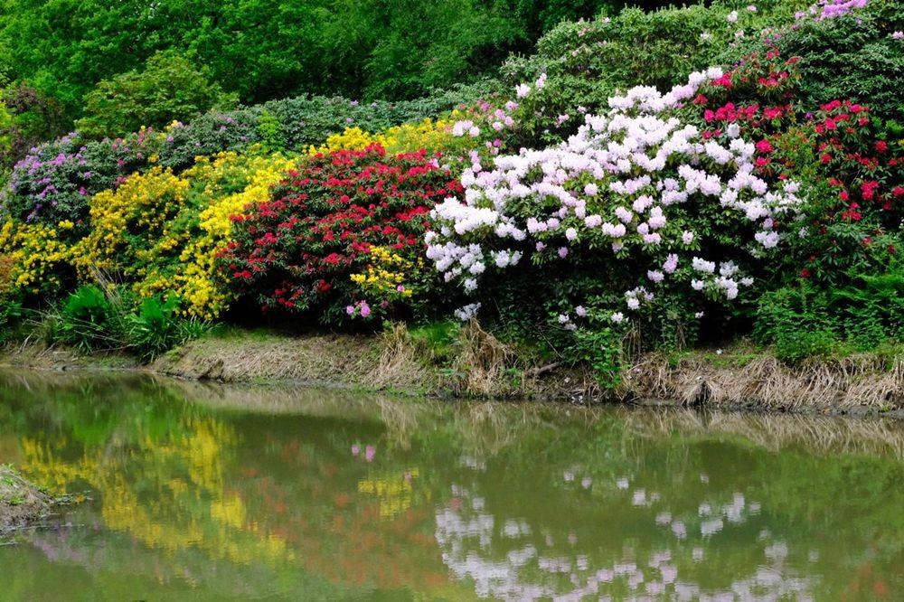 莱昂纳德利湖和花园_图1-30