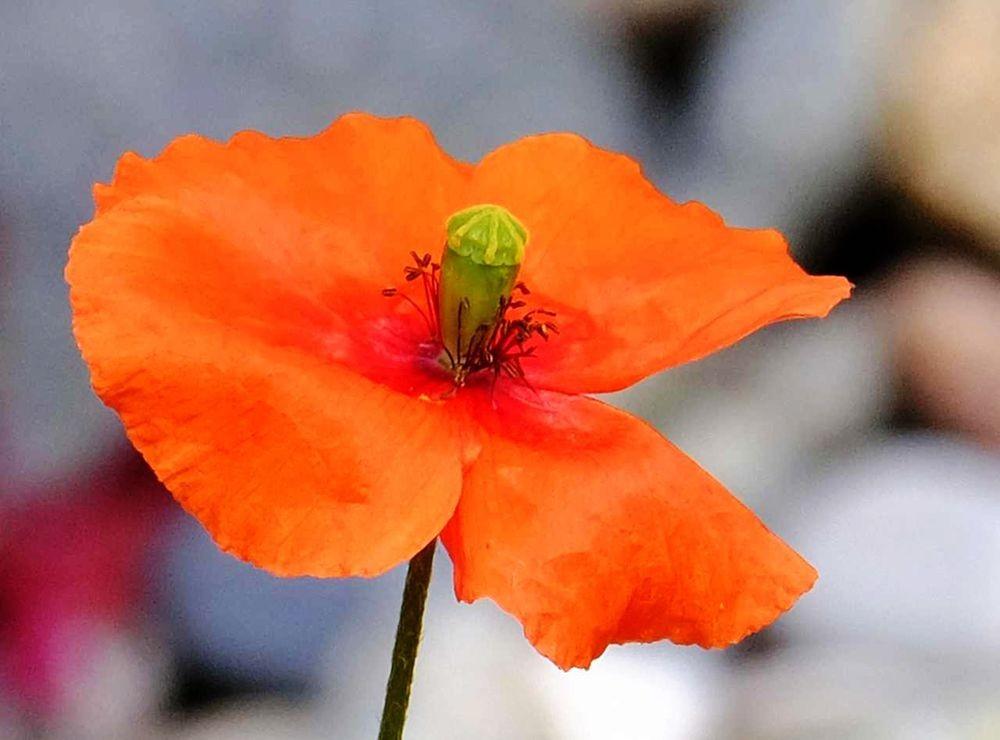 花卉日记-52_图1-1