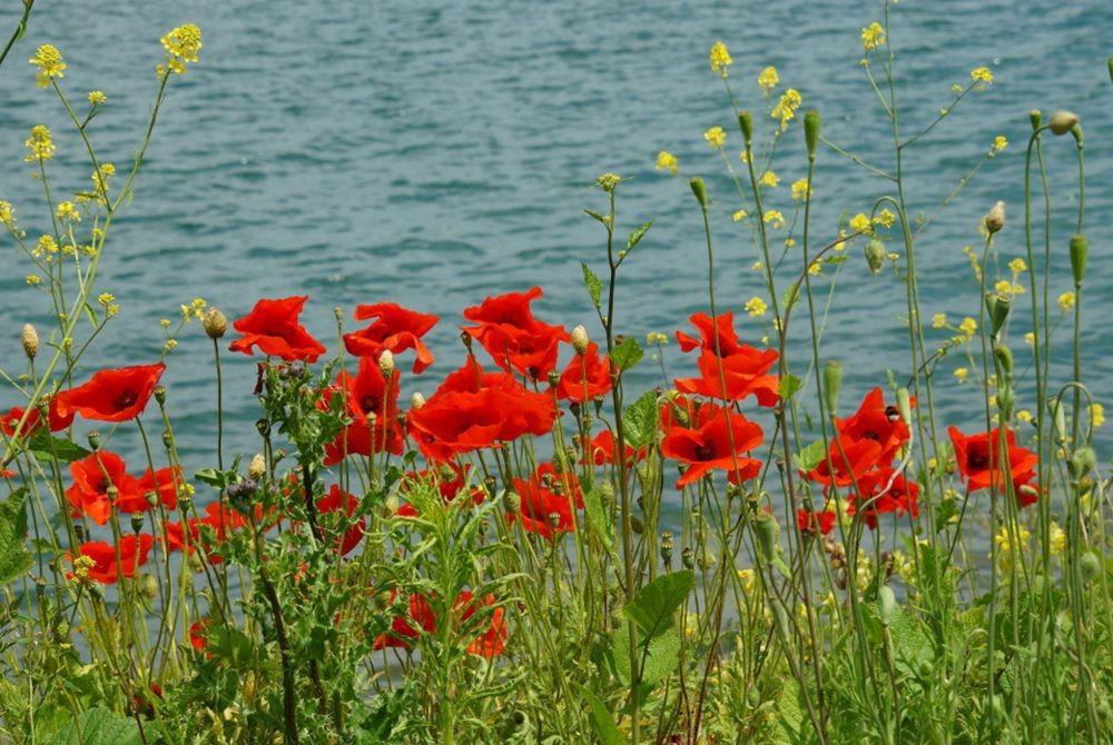 花卉日记-52_图1-3