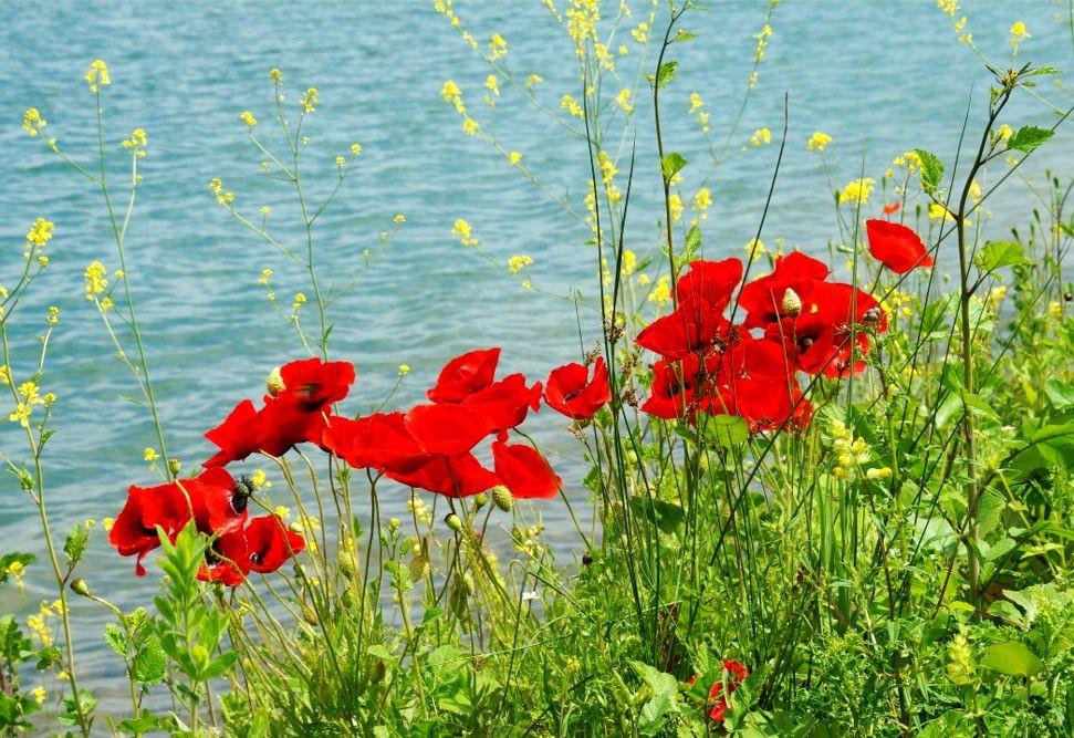 花卉日记-52_图1-4