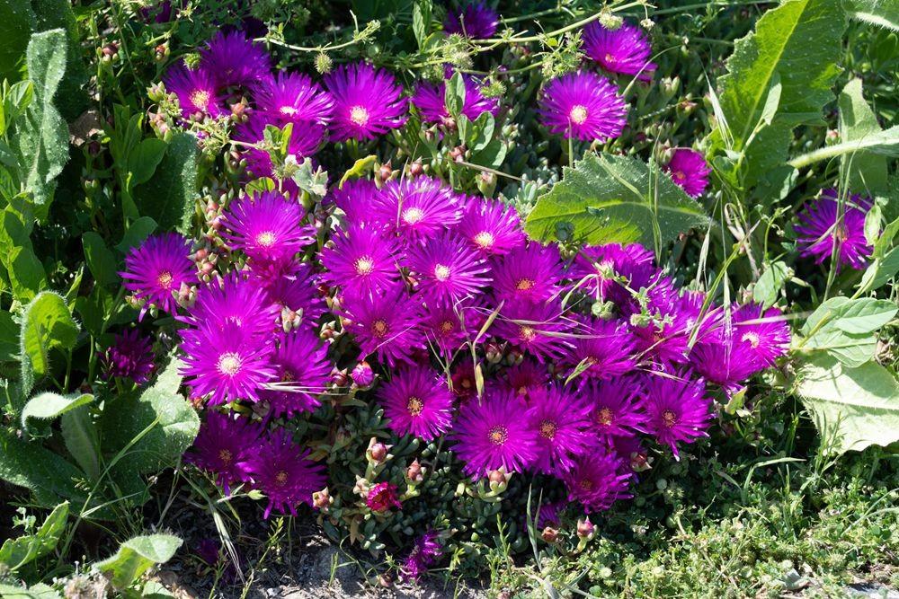 花卉日记-52_图1-6
