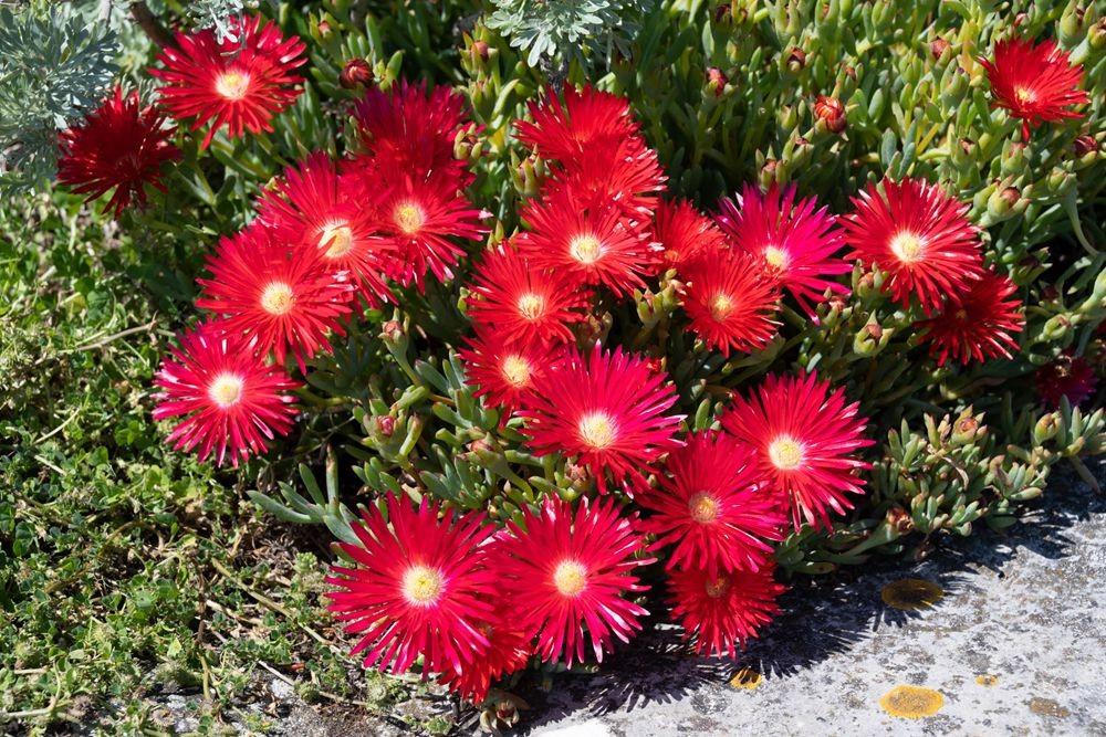 花卉日记-52_图1-7