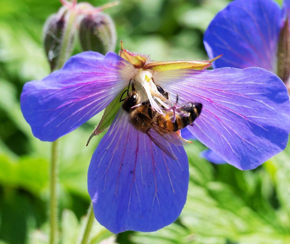 花卉日记-52_图1-8