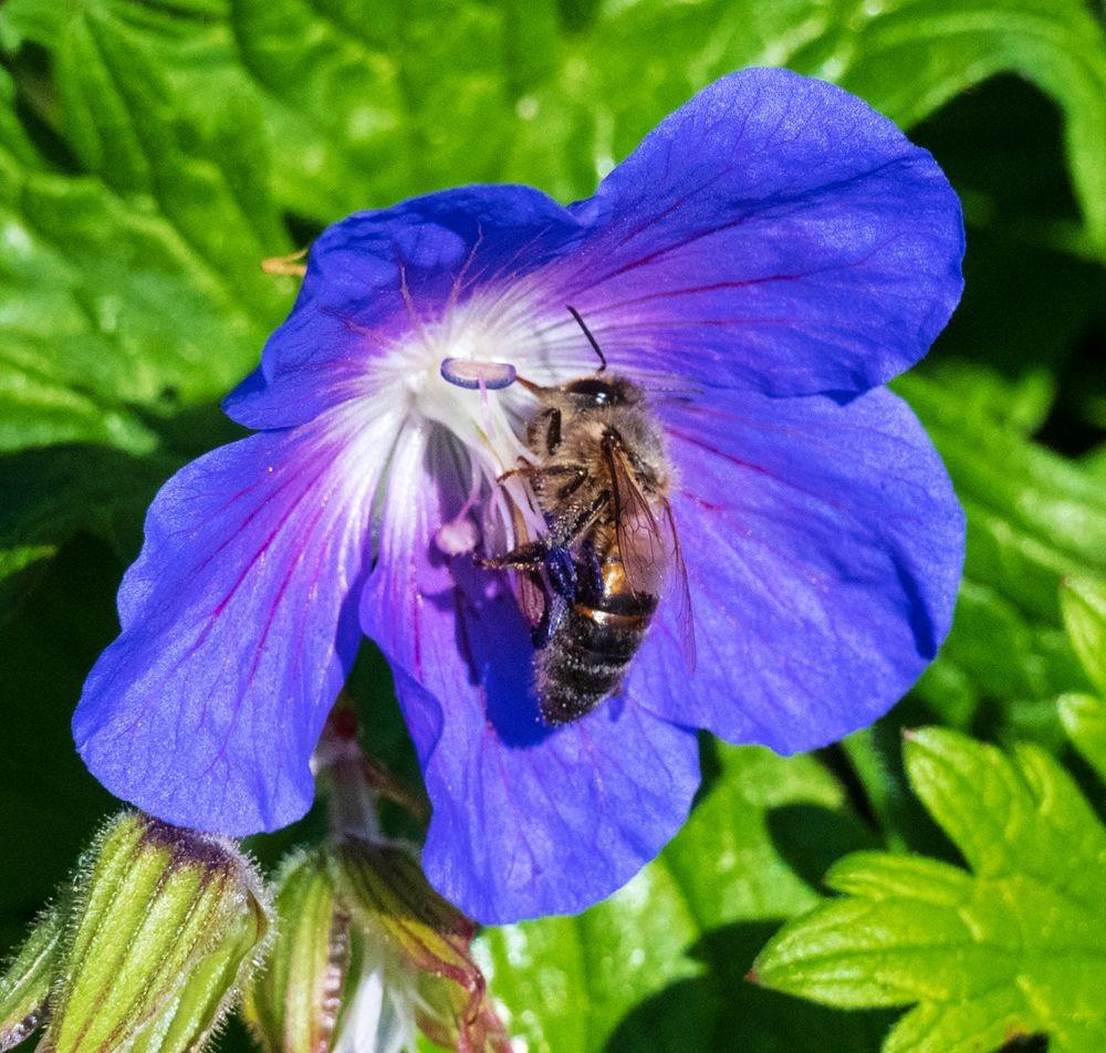 花卉日记-52_图1-9