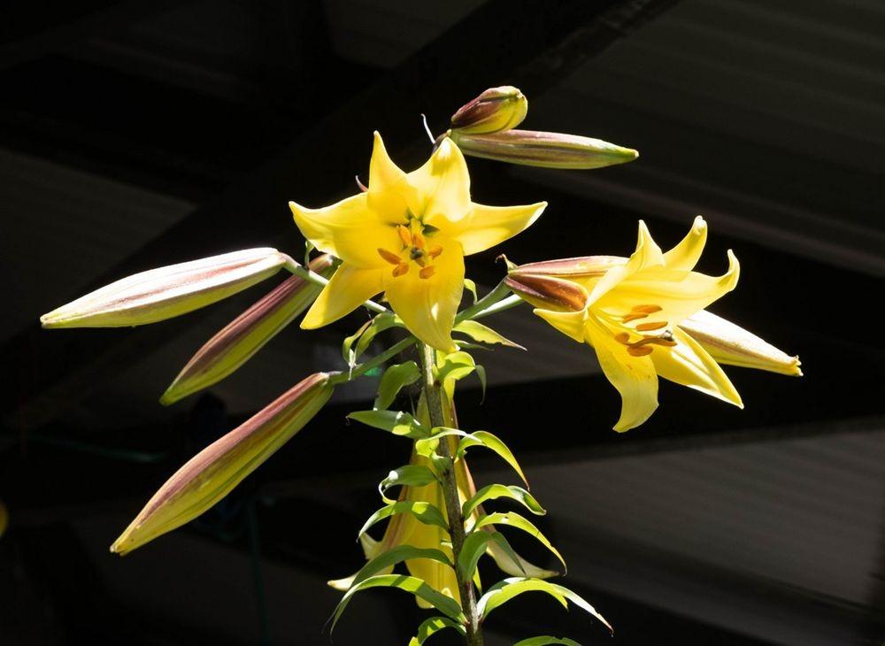 花卉日记-52_图1-11