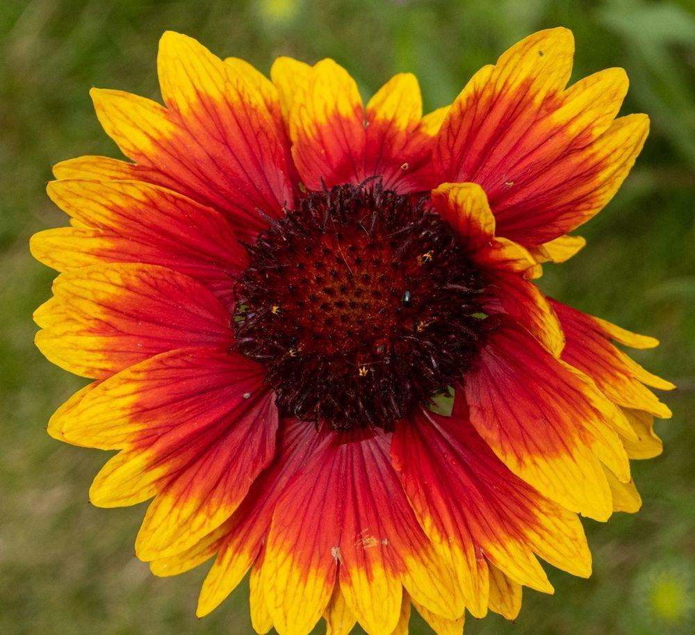花卉日记-52_图1-13