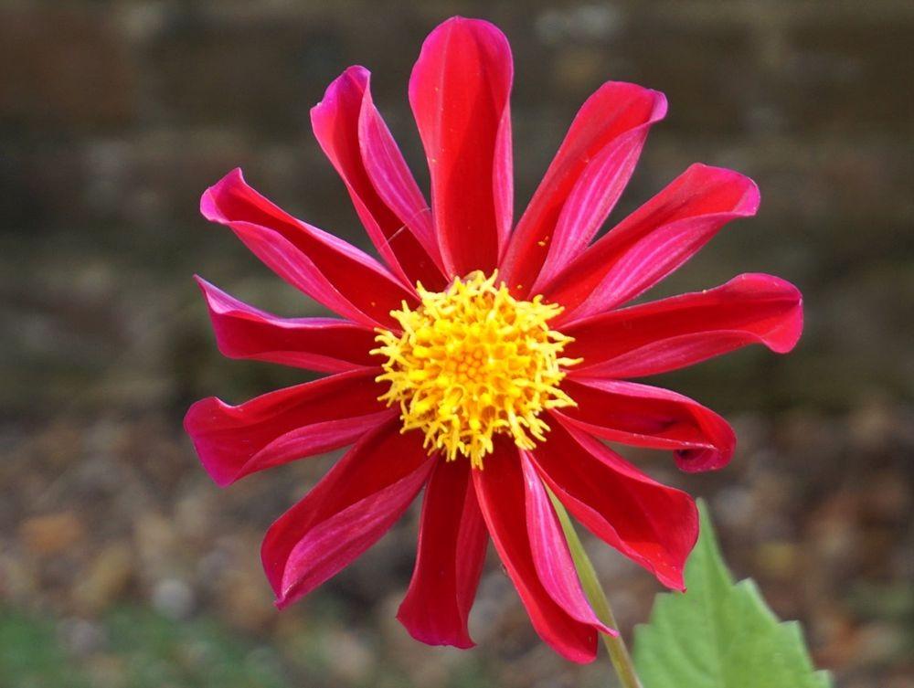 花卉日记-52_图1-15