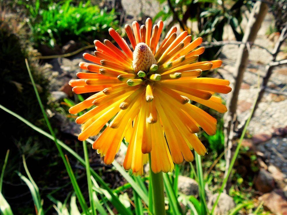 花卉日记-52_图1-20