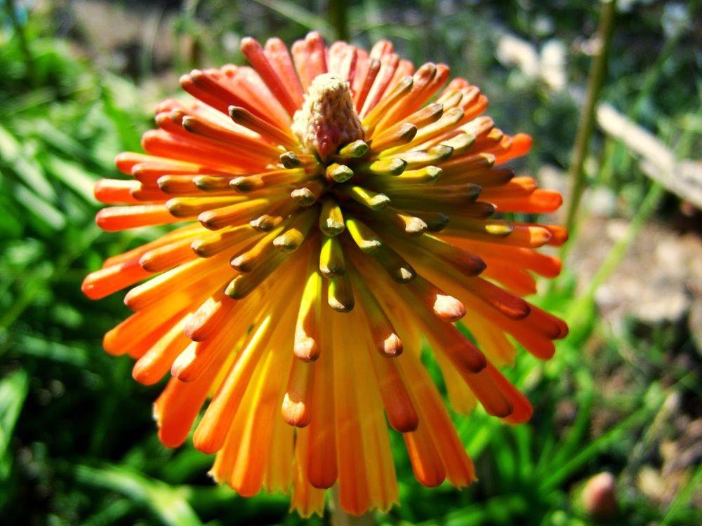 花卉日记-52_图1-21