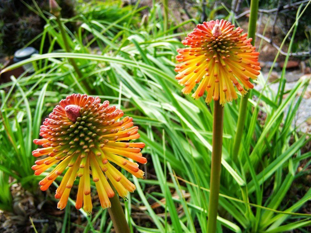 花卉日记-52_图1-23