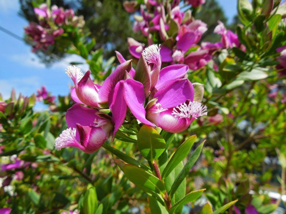 花卉日记-52_图1-24