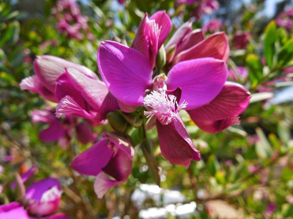 花卉日记-52_图1-25