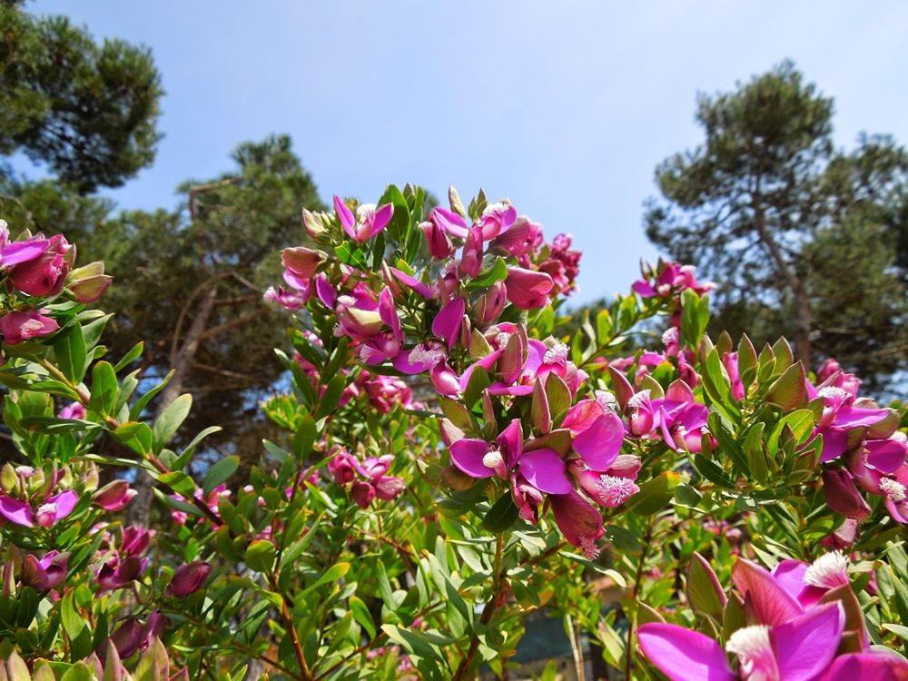 花卉日记-52_图1-26