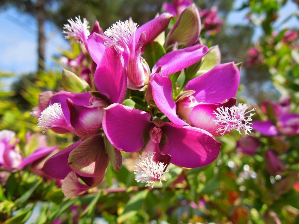 花卉日记-52_图1-27
