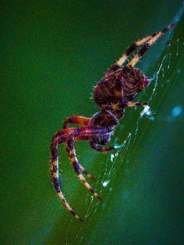 小蜘蛛,天罗地网_图1-8