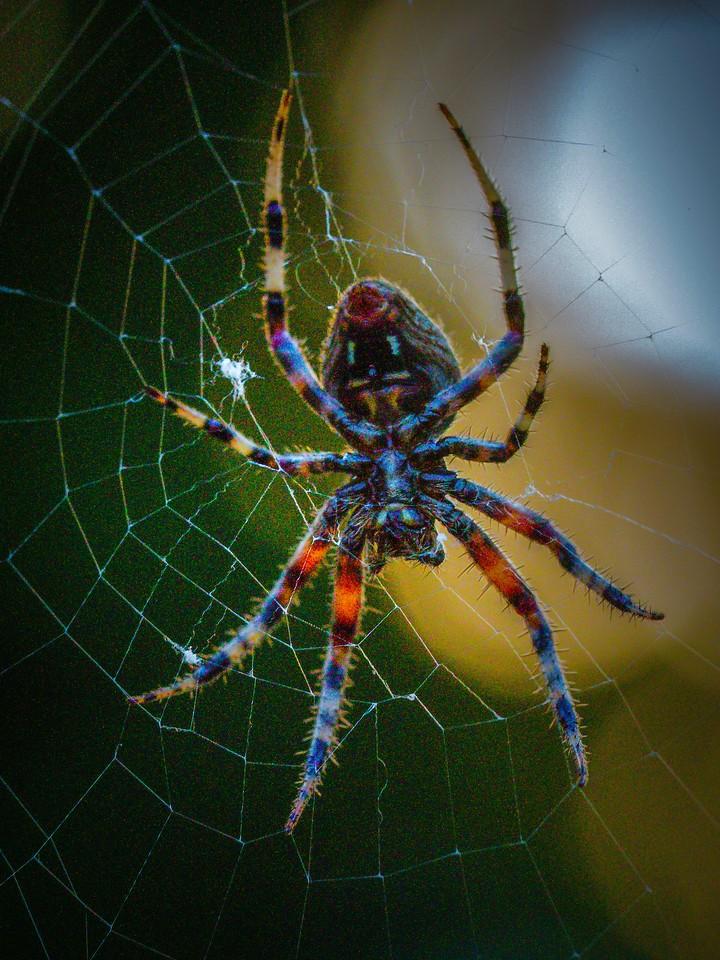 小蜘蛛,天罗地网_图1-6
