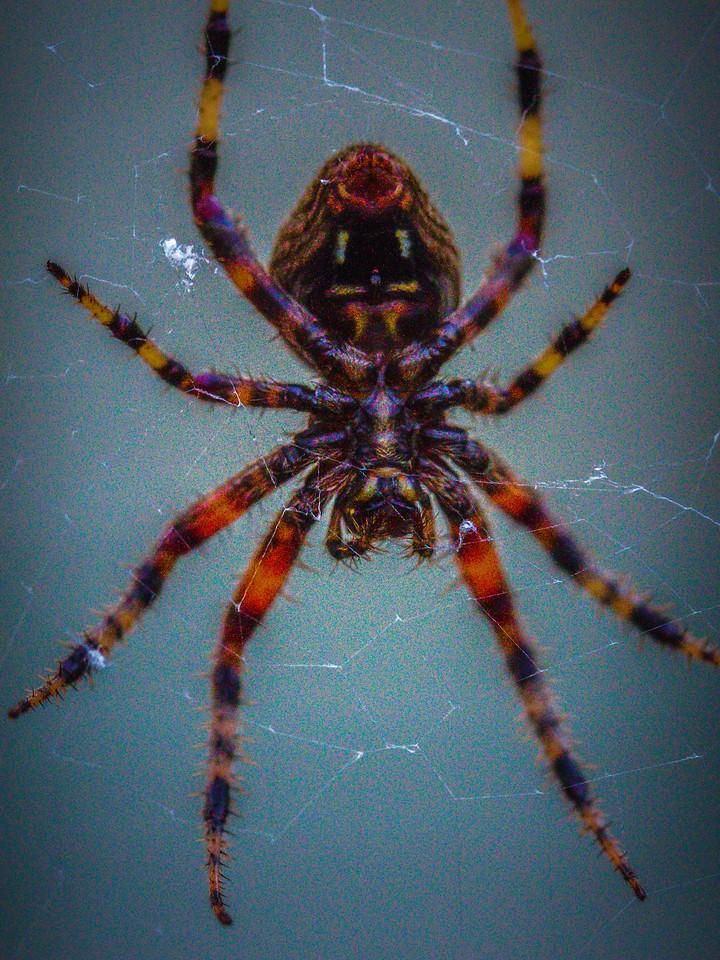 小蜘蛛,天罗地网_图1-7