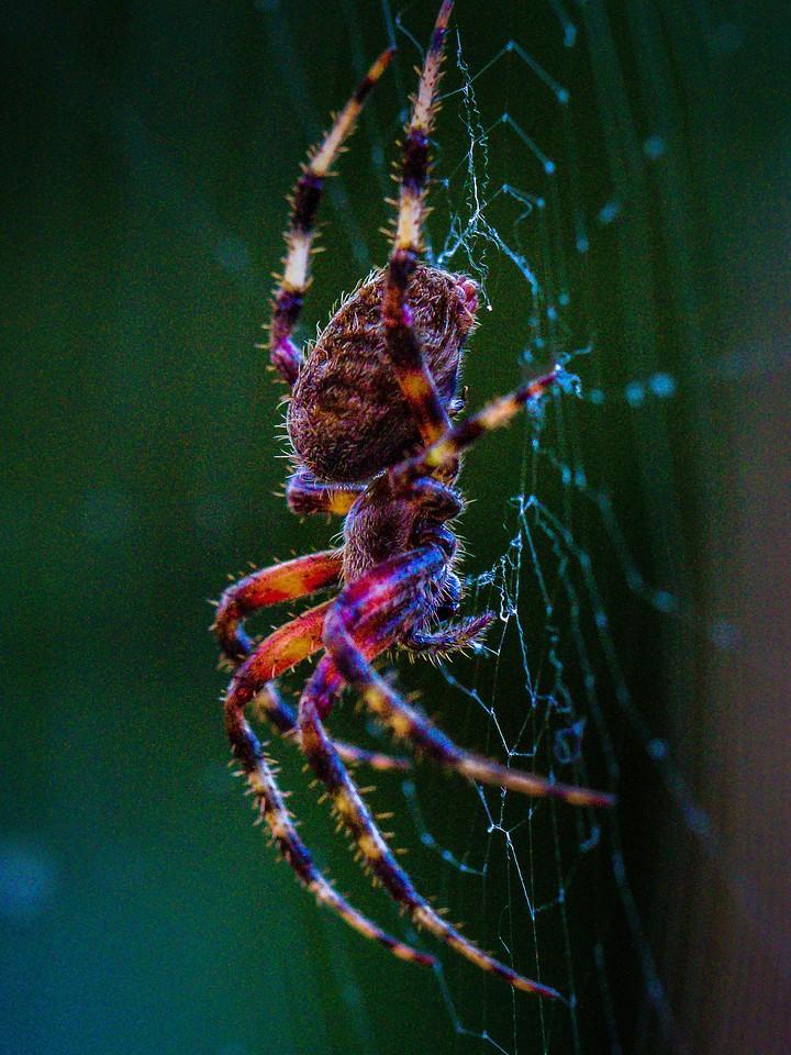 小蜘蛛,天罗地网_图1-1