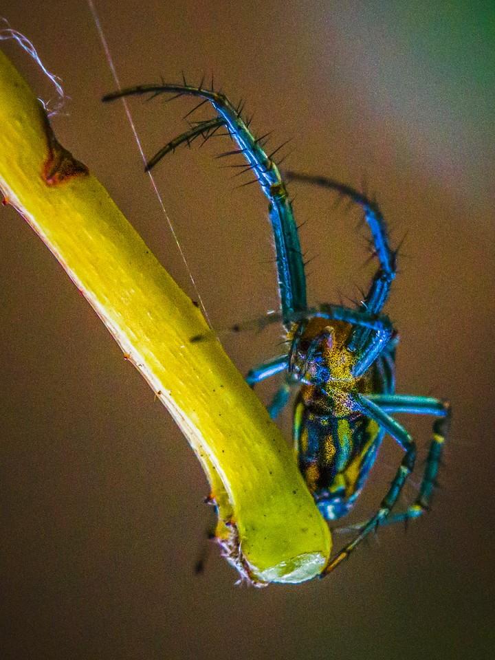 小蜘蛛,天罗地网_图1-2