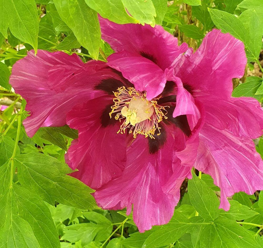 花卉日记-53_图1-1
