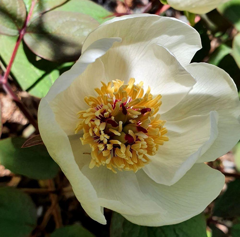 花卉日记-53_图1-5