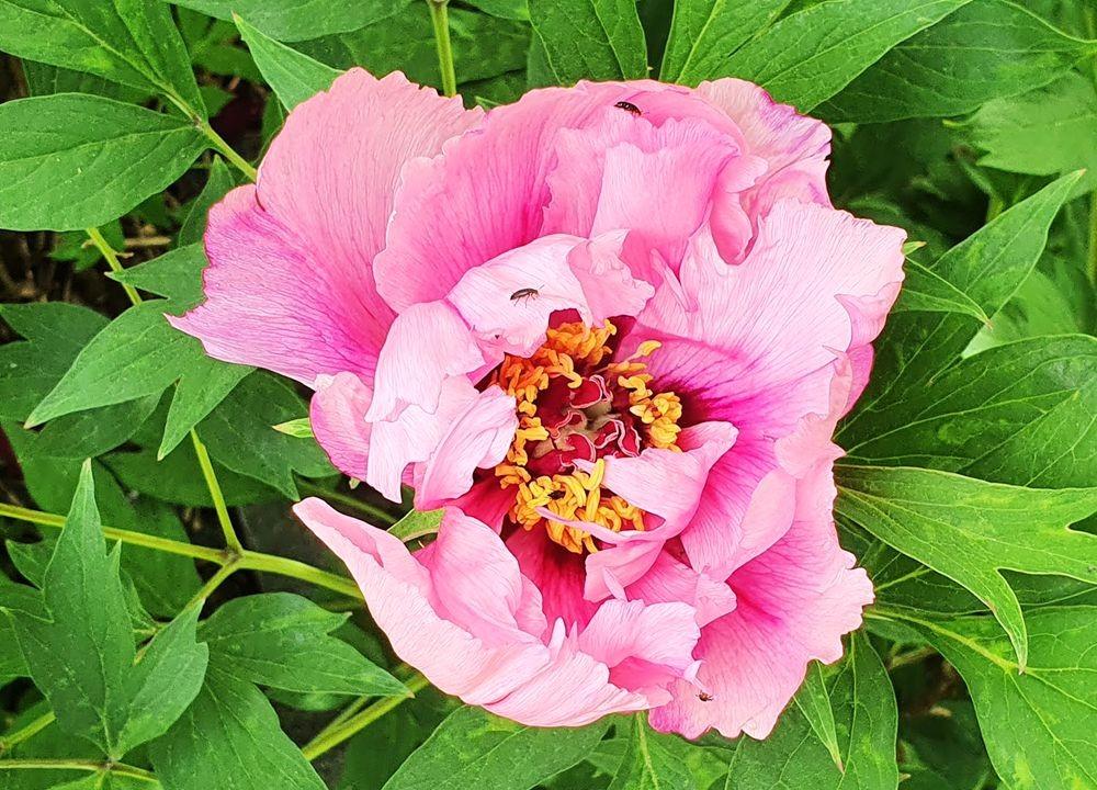 花卉日记-53_图1-6