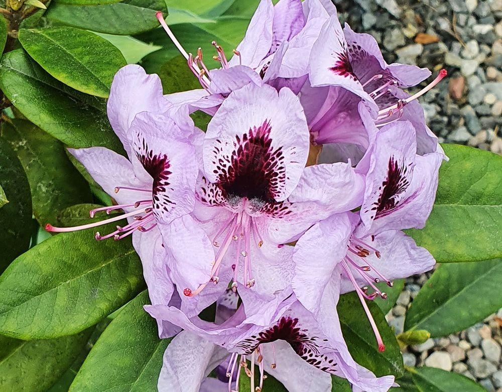 花卉日记-53_图1-7