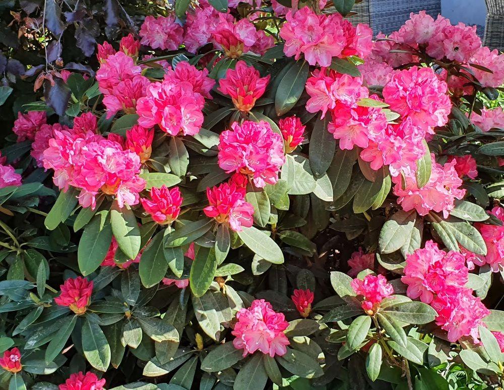 花卉日记-53_图1-8