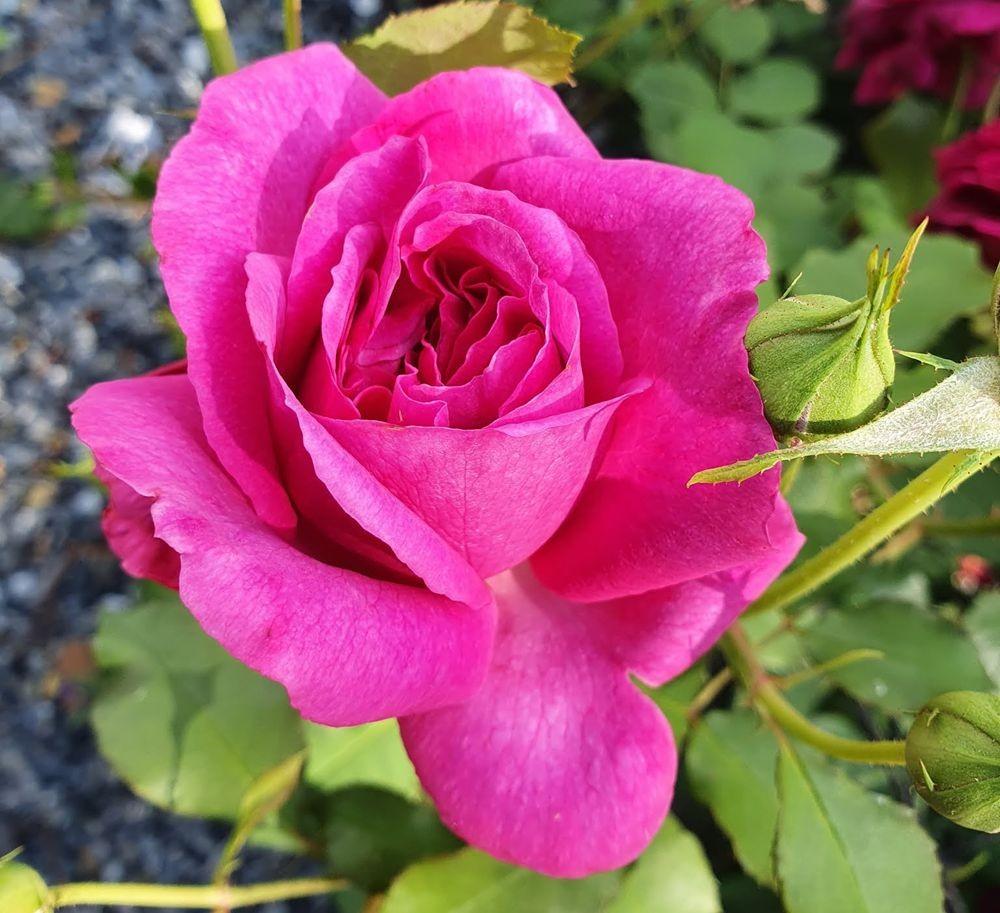 花卉日记-53_图1-18
