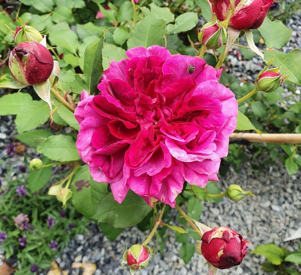 花卉日记-53_图1-19