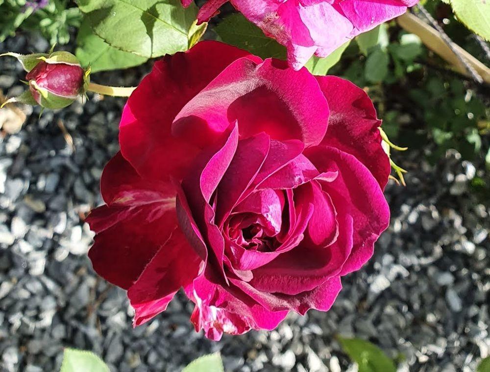 花卉日记-53_图1-20