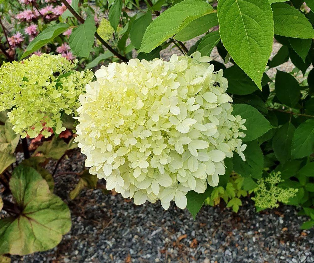 花卉日记-53_图1-23