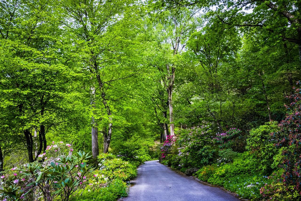 滨州詹金斯植物园(Jenkins Arboretum),美景如画_图1-5