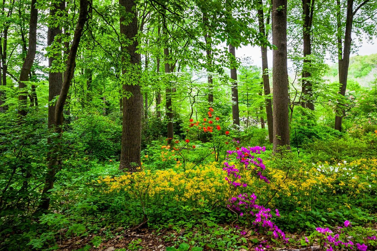滨州詹金斯植物园(Jenkins Arboretum),美景如画_图1-6