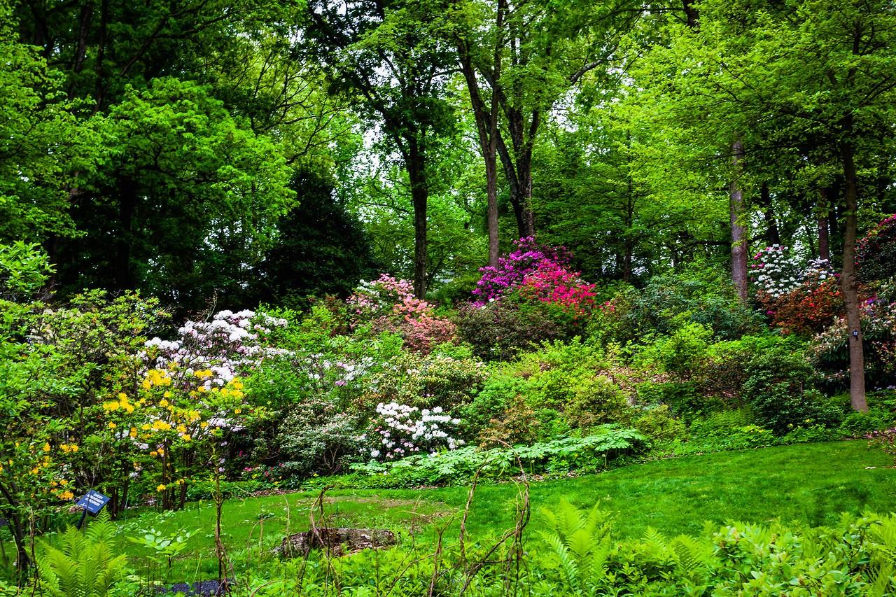 滨州詹金斯植物园(Jenkins Arboretum),美景如画_图1-7